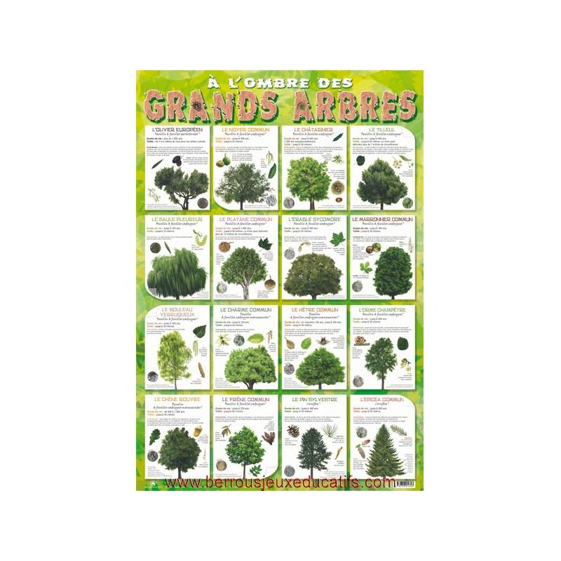 Poster éducatif Les grands arbres